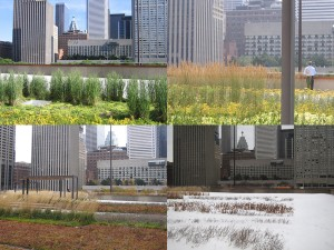 Toronto City Hall green roof- seasons