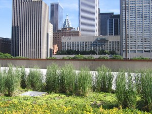 Toronto City Hall green roof- spring