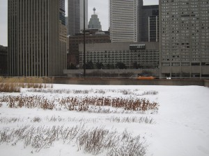 Toronto City Hall green roof- winter